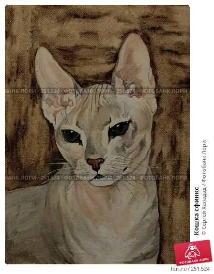 Кошка сфинкс, иллюстрация № 251524 (c) Сергей Халадад / Фотобанк Лори