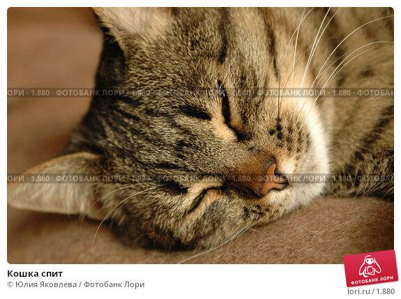 Кошка спит, фото № 1880, снято 21 марта 2006 г. (c) Юлия Яковлева / Фотобанк Лори