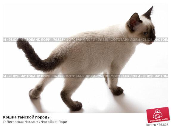 Кошка тайской породы, фото № 76828, снято 4 августа 2007 г. (c) Лисовская Наталья / Фотобанк Лори