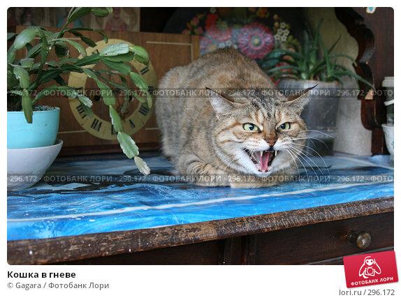 Кошка в гневе, фото № 296172, снято 10 мая 2007 г. (c) Gagara / Фотобанк Лори