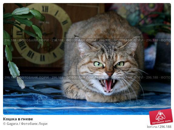 Кошка в гневе, фото № 296188, снято 10 мая 2007 г. (c) Gagara / Фотобанк Лори