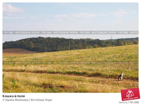 Кошка в поле, эксклюзивное фото № 191568, снято 26 сентября 2007 г. (c) Ирина Мойсеева / Фотобанк Лори
