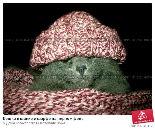 Кошка в шапке и шарфе на черном фоне, фото № 31312, снято 25 января 2006 г. (c) Даша Богословская / Фотобанк Лори