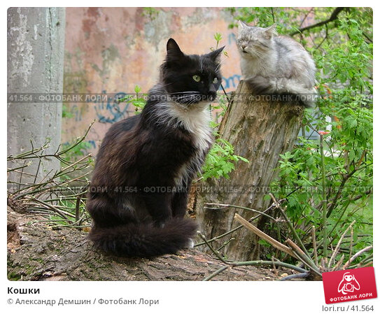 Кошки, фото № 41564, снято 12 июня 2004 г. (c) Александр Демшин / Фотобанк Лори