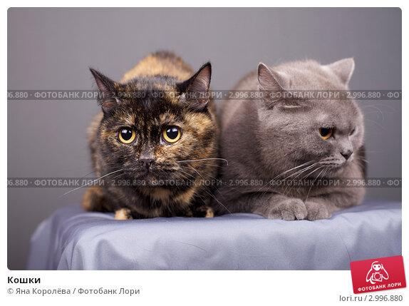 Купить «Кошки», эксклюзивное фото № 2996880, снято 1 апреля 2020 г. (c) Яна Королёва / Фотобанк Лори