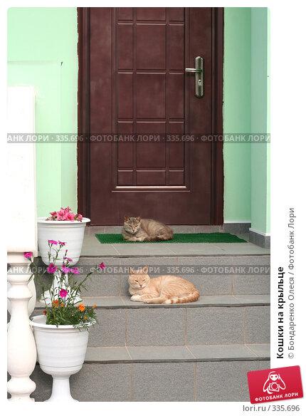Купить «Кошки на крыльце», эксклюзивное фото № 335696, снято 26 июня 2008 г. (c) Бондаренко Олеся / Фотобанк Лори