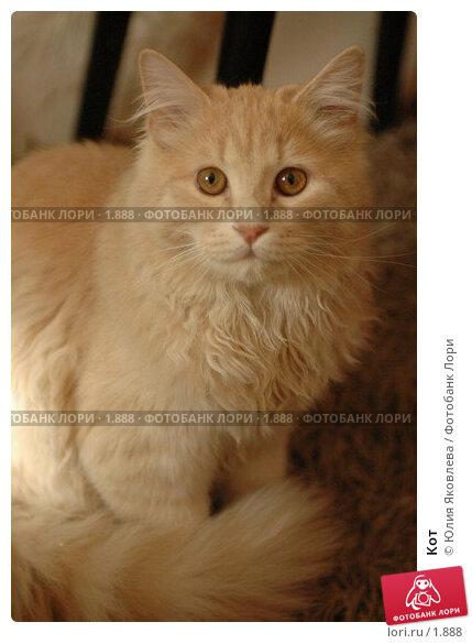 Кот, фото № 1888, снято 22 марта 2006 г. (c) Юлия Яковлева / Фотобанк Лори