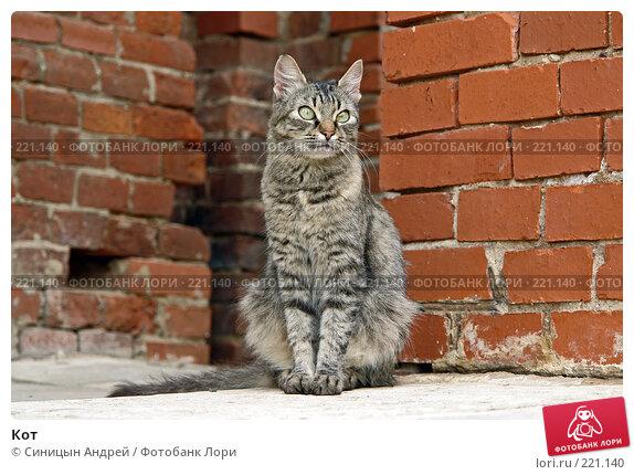 Кот, фото № 221140, снято 28 сентября 2007 г. (c) Синицын Андрей / Фотобанк Лори