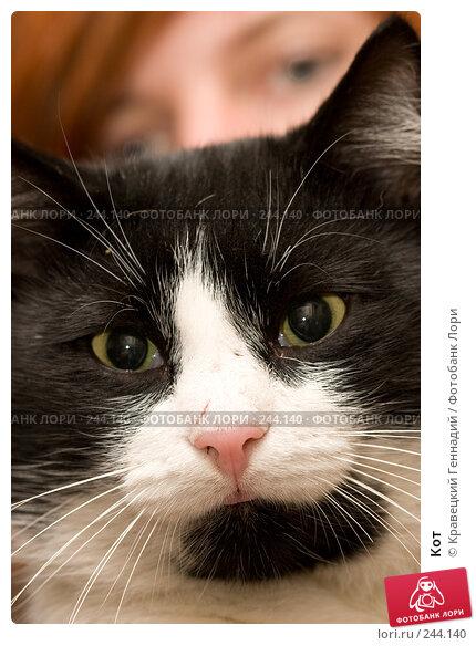 Купить «Кот», фото № 244140, снято 12 ноября 2004 г. (c) Кравецкий Геннадий / Фотобанк Лори