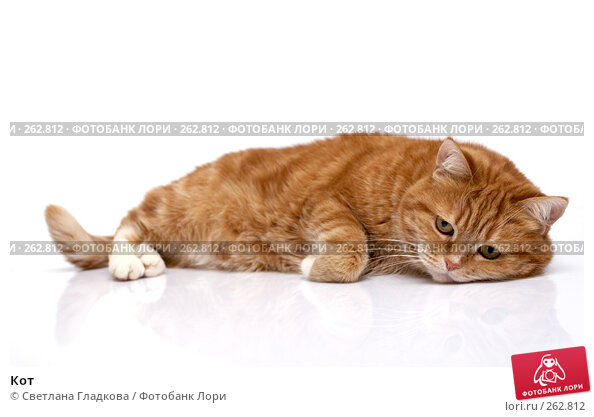 Купить «Кот», фото № 262812, снято 8 апреля 2008 г. (c) Cветлана Гладкова / Фотобанк Лори