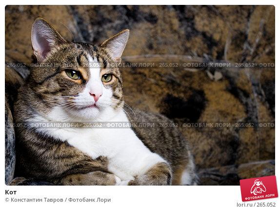Купить «Кот», фото № 265052, снято 9 мая 2007 г. (c) Константин Тавров / Фотобанк Лори