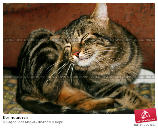 Кот чешется, фото № 27032, снято 23 февраля 2006 г. (c) Сафронова Мария / Фотобанк Лори