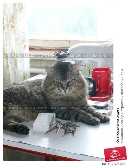 Кот-хозяина ждет, фото № 325224, снято 17 июня 2008 г. (c) Коннов Леонид Петрович / Фотобанк Лори