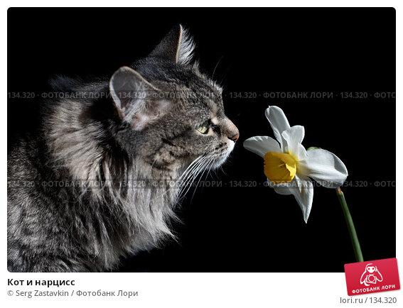 Кот и нарцисс, фото № 134320, снято 28 мая 2006 г. (c) Serg Zastavkin / Фотобанк Лори