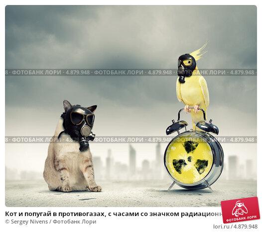 Yellow bird cat toy