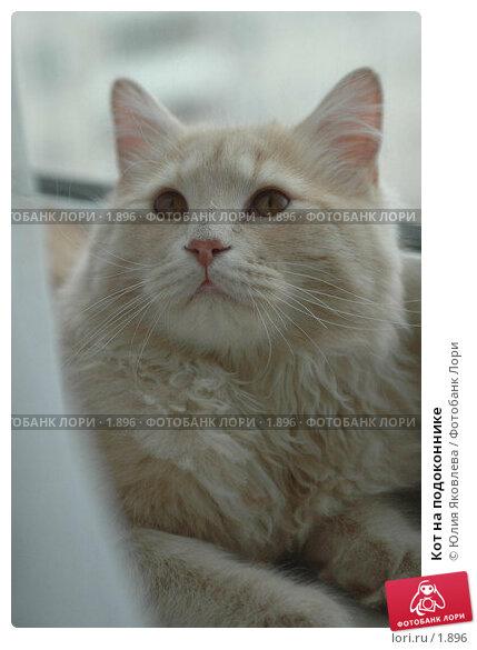 Кот на подоконнике, фото № 1896, снято 22 марта 2006 г. (c) Юлия Яковлева / Фотобанк Лори