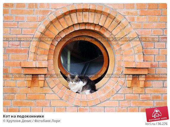 Купить «Кот на подоконнике», фото № 36276, снято 27 марта 2007 г. (c) Крупнов Денис / Фотобанк Лори