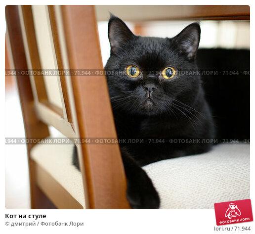 Купить «Кот на стуле», фото № 71944, снято 7 августа 2007 г. (c) дмитрий / Фотобанк Лори