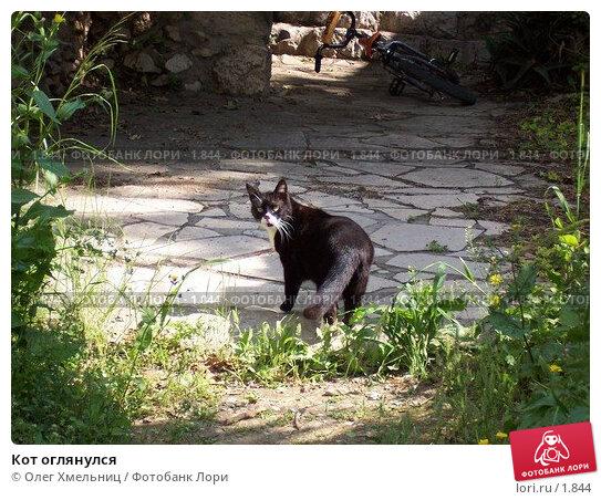 Кот оглянулся, фото № 1844, снято 11 марта 2006 г. (c) Олег Хмельниц / Фотобанк Лори