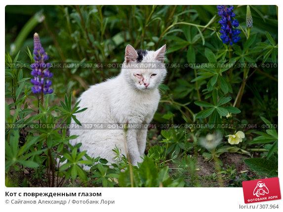 Кот с поврежденным глазом, эксклюзивное фото № 307964, снято 1 августа 2005 г. (c) Сайганов Александр / Фотобанк Лори