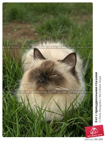 Купить «Кот с прищуренными глазами», фото № 86408, снято 20 марта 2018 г. (c) Лена Лазарева / Фотобанк Лори