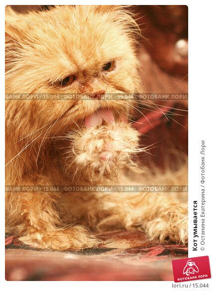 Кот умывается , фото № 15044, снято 1 ноября 2006 г. (c) Останина Екатерина / Фотобанк Лори