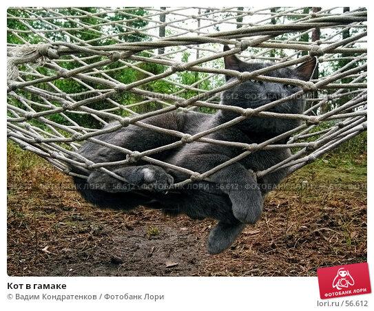 Кот в гамаке, фото № 56612, снято 25 марта 2017 г. (c) Вадим Кондратенков / Фотобанк Лори