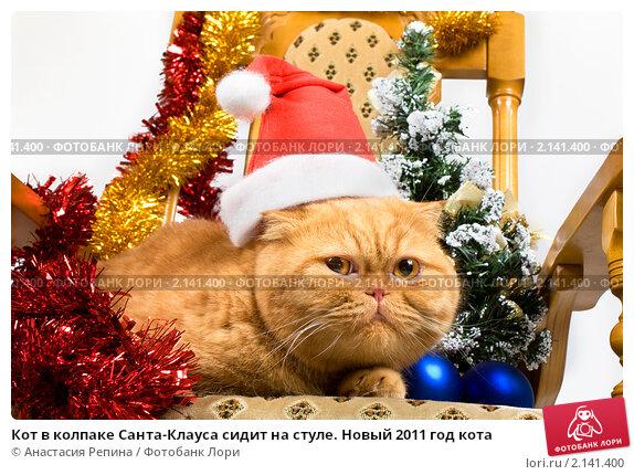 Купить «Кот в колпаке Санта-Клауса сидит на стуле. Новый 2011 год кота», фото № 2141400, снято 16 ноября 2010 г. (c) Анастасия Репина / Фотобанк Лори