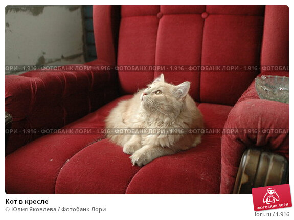 Кот в кресле, фото № 1916, снято 22 марта 2006 г. (c) Юлия Яковлева / Фотобанк Лори