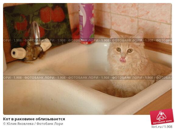 Кот в раковине облизывается, фото № 1908, снято 22 марта 2006 г. (c) Юлия Яковлева / Фотобанк Лори