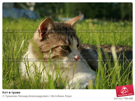 Кот в траве, фото № 106648, снято 3 июня 2007 г. (c) Чумилин Леонид Александрович / Фотобанк Лори