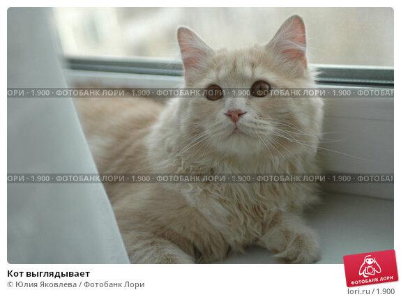 Кот выглядывает, фото № 1900, снято 22 марта 2006 г. (c) Юлия Яковлева / Фотобанк Лори