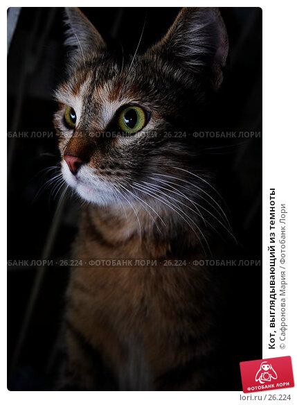 Кот, выглядывающий из темноты, фото № 26224, снято 21 октября 2006 г. (c) Сафронова Мария / Фотобанк Лори
