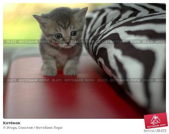 Котёнок, фото № 28672, снято 13 мая 2006 г. (c) Игорь Соколов / Фотобанк Лори