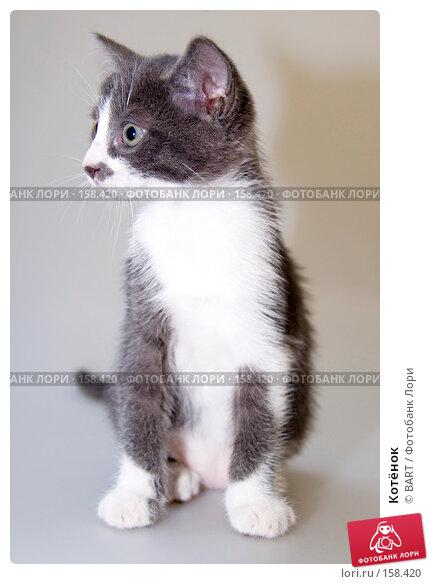 Котёнок, фото № 158420, снято 4 июня 2007 г. (c) BART / Фотобанк Лори