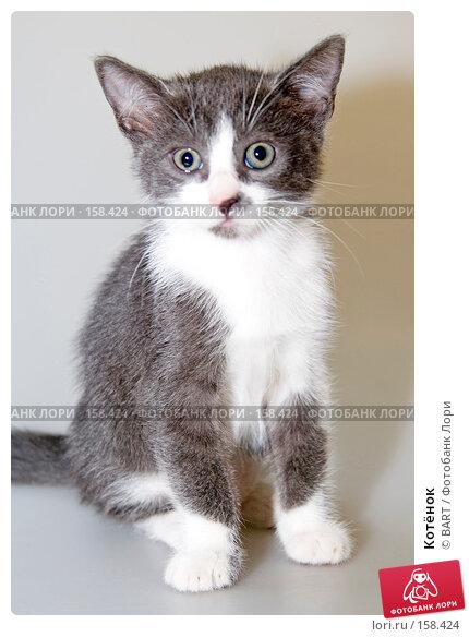 Котёнок, фото № 158424, снято 4 июня 2007 г. (c) BART / Фотобанк Лори