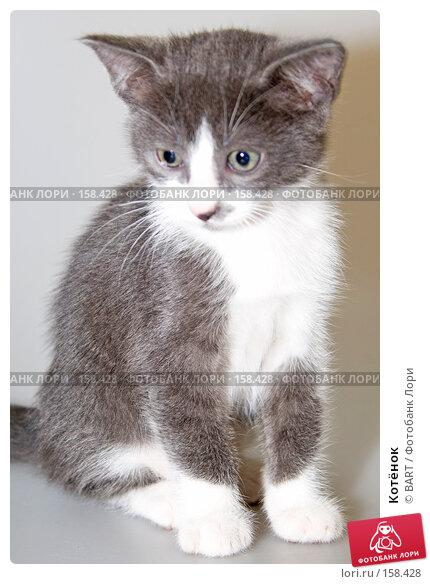 Котёнок, фото № 158428, снято 4 июня 2007 г. (c) BART / Фотобанк Лори