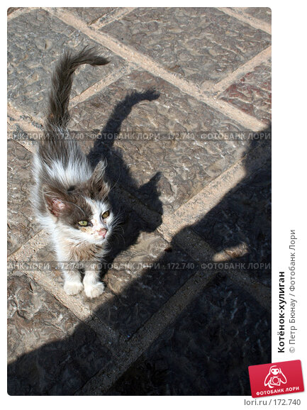 Котёнок-хулиган, фото № 172740, снято 7 октября 2007 г. (c) Петр Бюнау / Фотобанк Лори