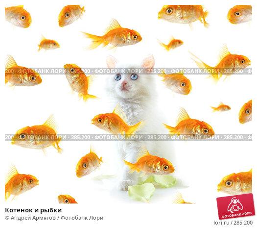 Купить «Котенок и рыбки», фото № 285200, снято 28 апреля 2007 г. (c) Андрей Армягов / Фотобанк Лори