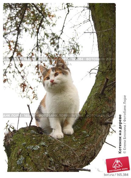 Котенок на дереве, фото № 165384, снято 18 октября 2007 г. (c) Елена Блохина / Фотобанк Лори