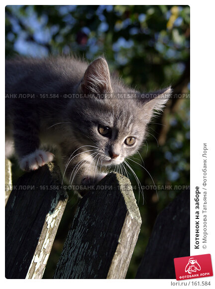 Котенок на заборе, фото № 161584, снято 1 сентября 2004 г. (c) Морозова Татьяна / Фотобанк Лори