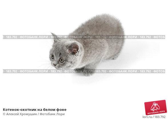 Котенок-охотник на белом фоне, фото № 183792, снято 27 октября 2007 г. (c) Алексей Хромушин / Фотобанк Лори