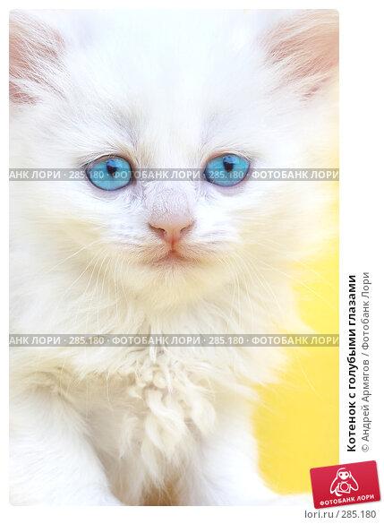 Котенок с голубыми глазами, фото № 285180, снято 28 марта 2007 г. (c) Андрей Армягов / Фотобанк Лори