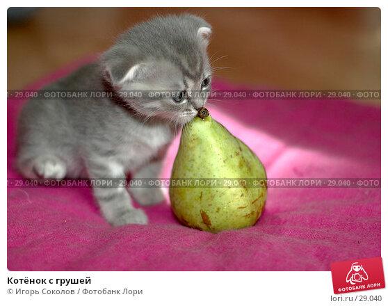 Купить «Котёнок с грушей», фото № 29040, снято 13 мая 2006 г. (c) Игорь Соколов / Фотобанк Лори