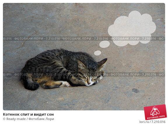 Видеть во сне, будто он цапнул за руку, означает: кот, кошка, котенок кошки во сне означают мелких воров, завистников, клеветников или болезни… кот, кошка, котенок видеть во сне кошек или котов — к измене в… котенок вообще котята во сне символизируют мелкие неприятности и раздражение.