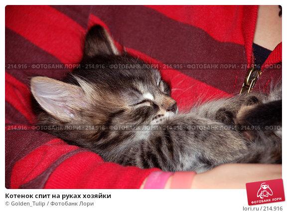 Котенок спит на руках хозяйки, фото № 214916, снято 23 ноября 2007 г. (c) Golden_Tulip / Фотобанк Лори