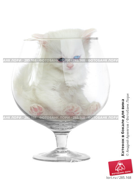 Котенок в бокале для вина, фото № 285168, снято 26 марта 2007 г. (c) Андрей Армягов / Фотобанк Лори