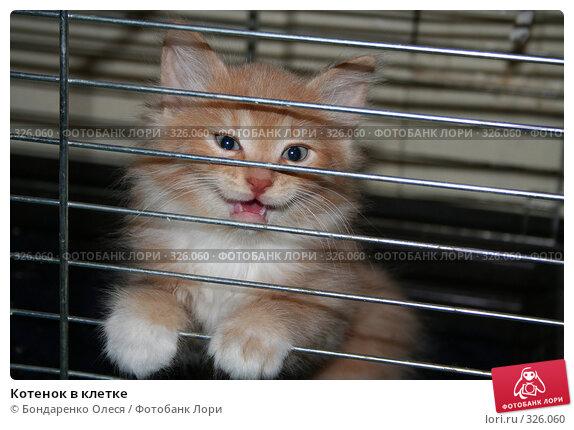 Купить «Котенок в клетке», фото № 326060, снято 26 сентября 2006 г. (c) Бондаренко Олеся / Фотобанк Лори