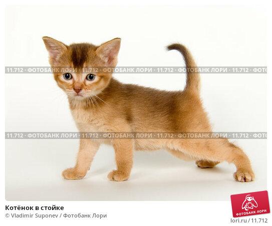 Котёнок в стойке, фото № 11712, снято 13 ноября 2005 г. (c) Vladimir Suponev / Фотобанк Лори