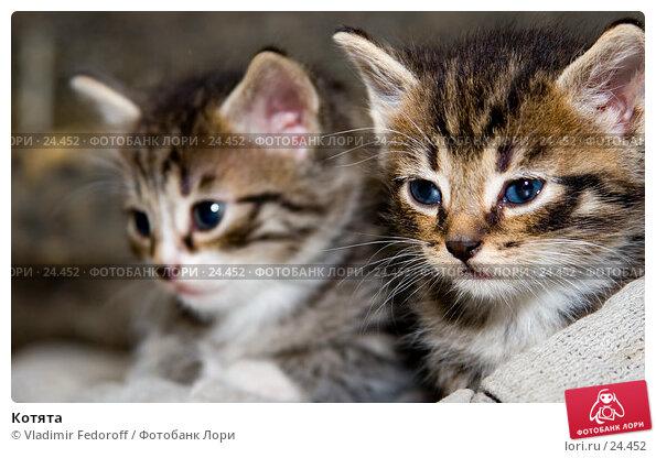 Котята, фото № 24452, снято 7 сентября 2006 г. (c) Vladimir Fedoroff / Фотобанк Лори